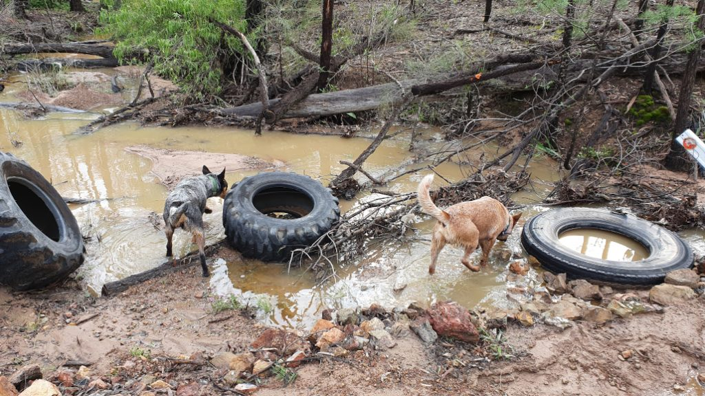 dogs at damaged creek crossing